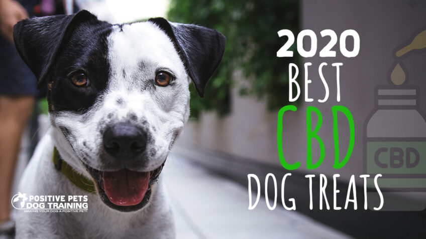 The Best CBD Dog Treats of 2020