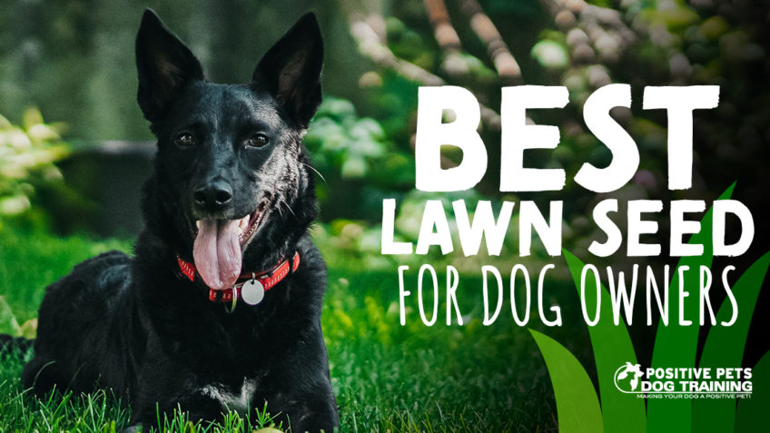 The Best Types of Lawn Seed for Dog Owners