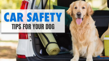 Car Safety Tips for Your Dog in 2021