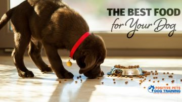 Choosing the Best Food for Your Dog