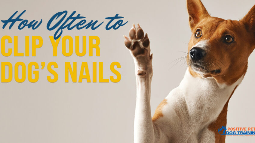 How Often to Clip Dog Nails
