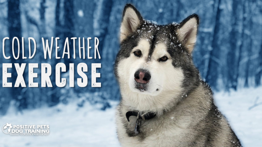 Exercising with Your Dog in Cold Weather