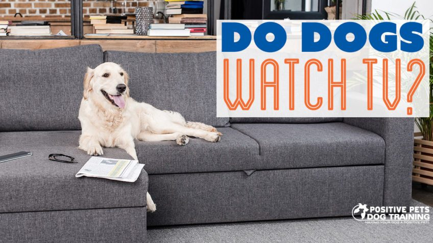 Do Dogs Watch TV?