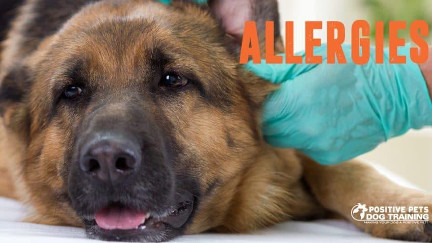 Dog allergies.