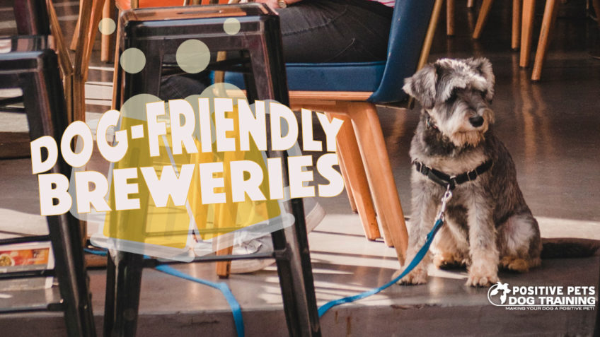 Charlotte Dog-Friendly Breweries