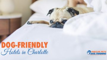 Dog-Friendly Hotels in Charlotte
