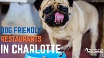 Dog Friendly Restaurants in Charlotte.