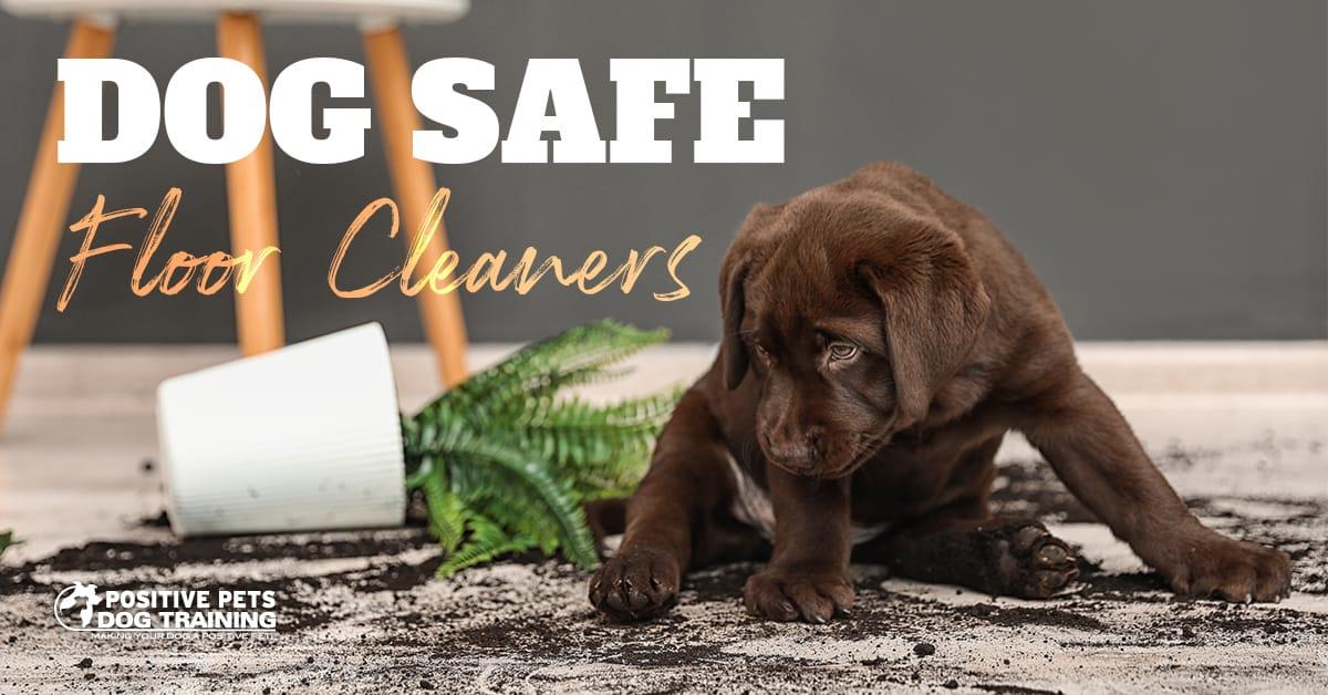 Dog Safe Floor Cleaners Positive Pets