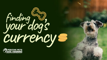 "Finding Your Dog's ""Currency"""
