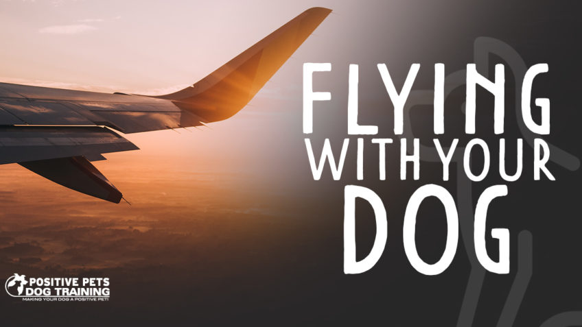 Flying With Your Dog