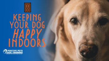 Keeping Your Dog Happy Indoors