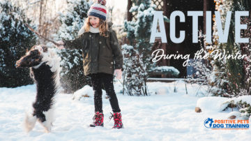 Keeping your dog active during the winter.