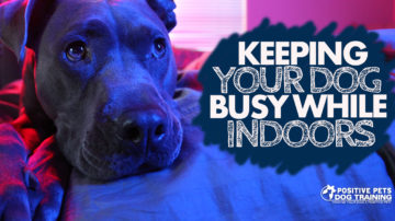 Keeping Your Dog Busy While Indoors