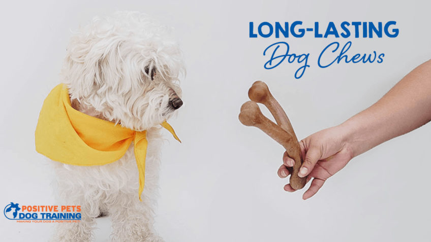 Long-Lasting Dog Chews