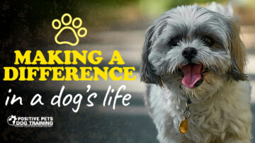 Making a Difference in a Dog's Life