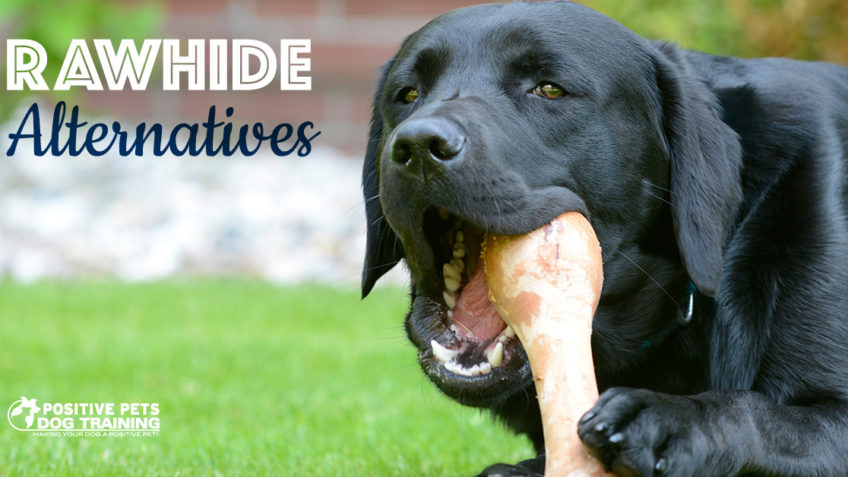 Rawhide alternatives for dogs.