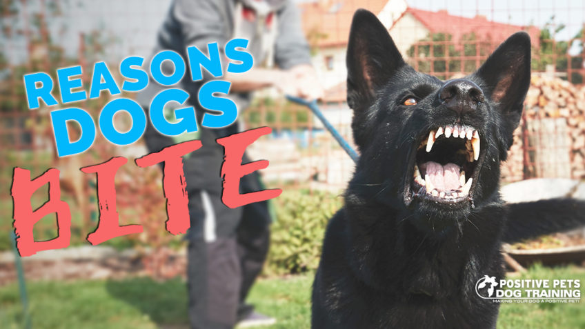 Reasons Dogs Bite
