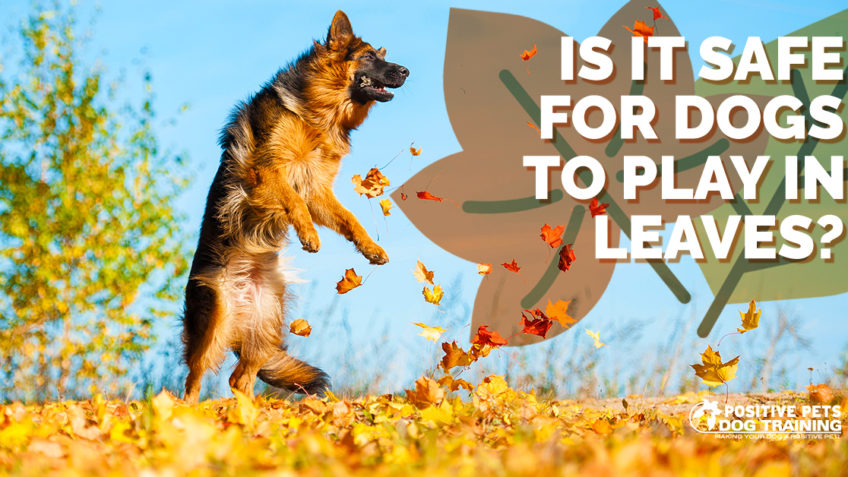 Is It Safe for Dogs to Play in Leaves?