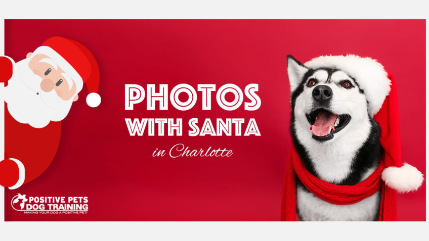 Dog Photos with Santa in Charlotte