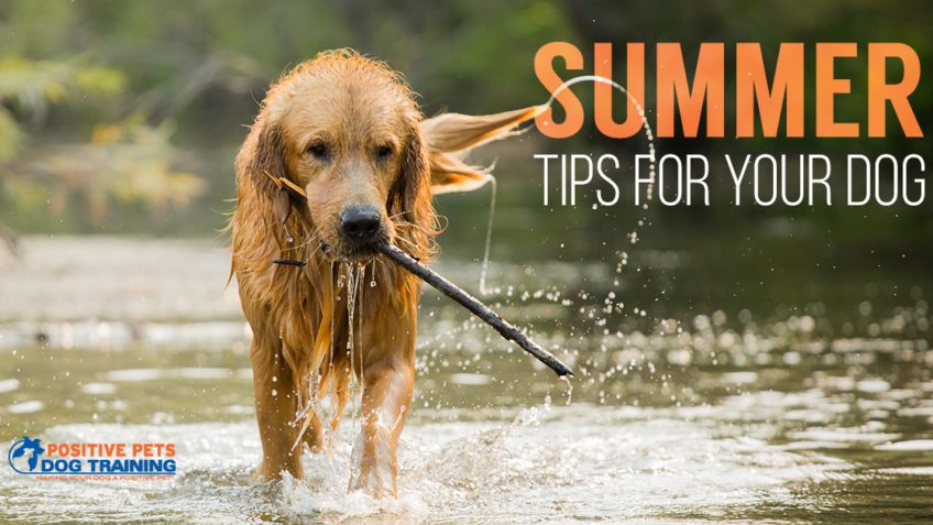 Summer tips for your dog.