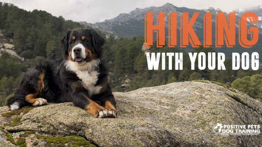 Taking your dog on a hike.