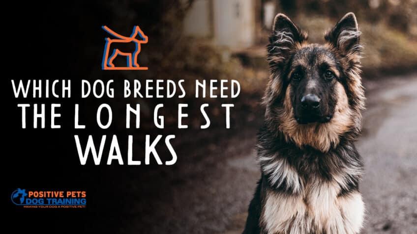 Which Dog Breeds Need the Longest Dog Walks?
