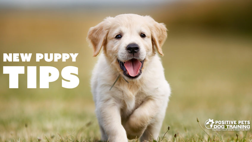 Tips for the First 30 Days with Your New Puppy