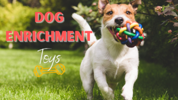 Toys for Dog Enrichment in 2021