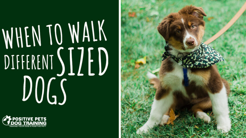 When to Walk Different Sized Dogs